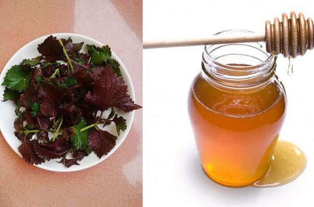 mật ong và lá tía tô